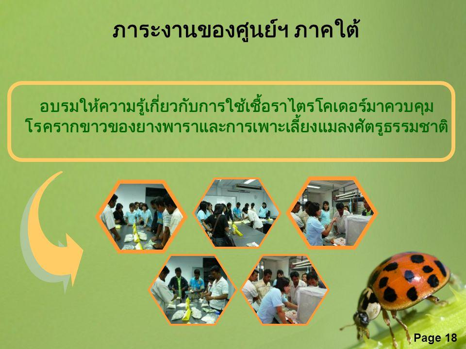 Page 18 อบรมให้ความรู้เกี่ยวกับการใช้เชื้อราไตรโคเดอร์มาควบคุม โรครากขาวของยางพาราและการเพาะเลี้ยงแมลงศัตรูธรรมชาติ ภาระงานของศูนย์ฯ ภาคใต้