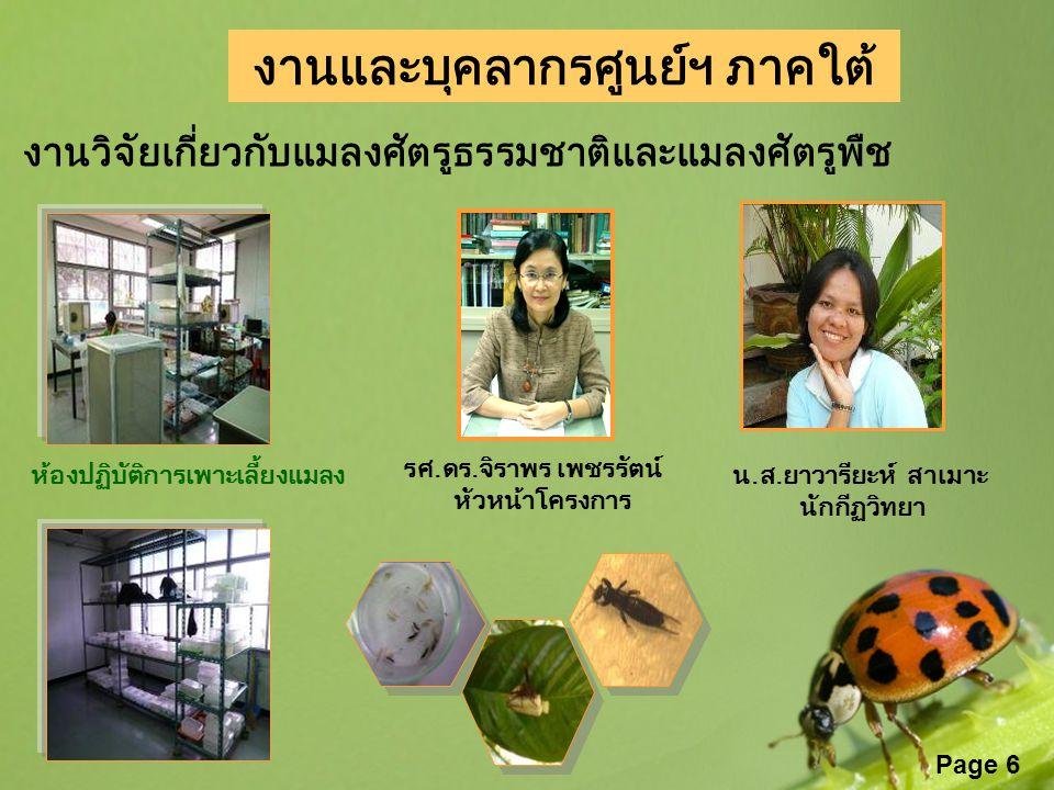 Page 6 งานและบุคลากรศูนย์ฯ ภาคใต้ รศ.ดร.จิราพร เพชรรัตน์ หัวหน้าโครงการ งานวิจัยเกี่ยวกับแมลงศัตรูธรรมชาติและแมลงศัตรูพืช น.ส.ยาวารียะห์ สาเมาะ นักกีฏ