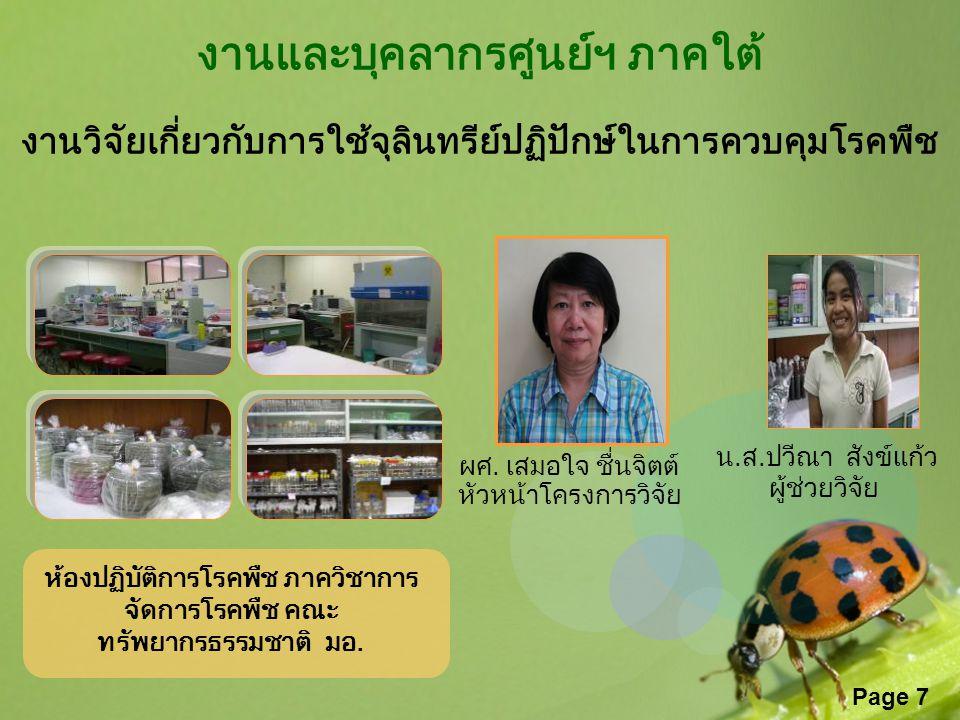 Page 7 งานและบุคลากรศูนย์ฯ ภาคใต้ งานวิจัยเกี่ยวกับการใช้จุลินทรีย์ปฏิปักษ์ในการควบคุมโรคพืช ผศ. เสมอใจ ชื่นจิตต์ หัวหน้าโครงการวิจัย น.ส.ปวีณา สังข์แ