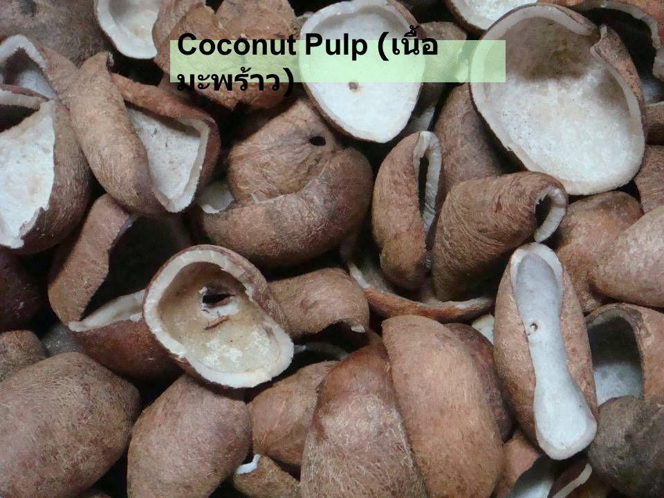 Coconut Pulp ( เนื้อ มะพร้าว )