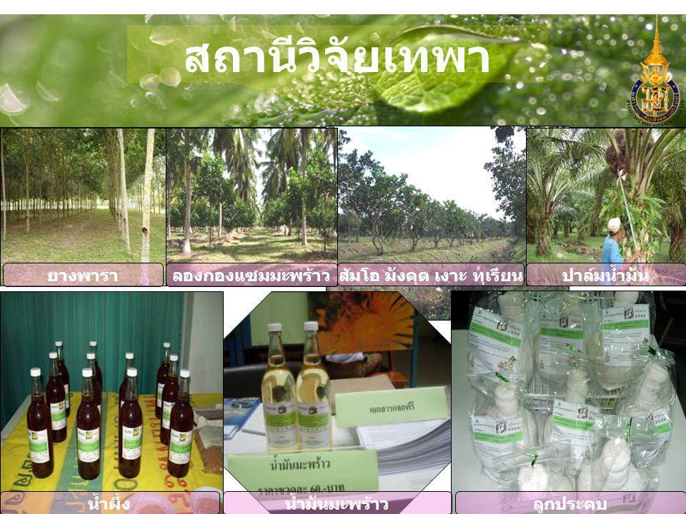สถานีวิจัยเทพา ส้มโอ มังคุด เงาะ ทุเรียน ลองกองแซมมะพร้าวยางพารา ปาล์มน้ำมัน ลูกประคบน้ำผึ้งน้ำมันมะพร้าว