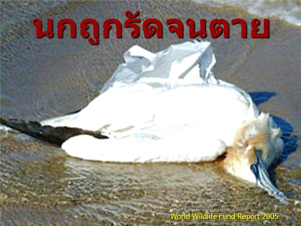 World Wildlife Fund Report 2005 นกถูกรัดจนตาย