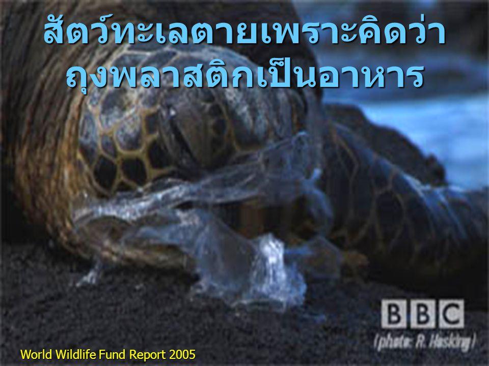 สัตว์ทะเลตายเพราะคิดว่า ถุงพลาสติกเป็นอาหาร World Wildlife Fund Report 2005