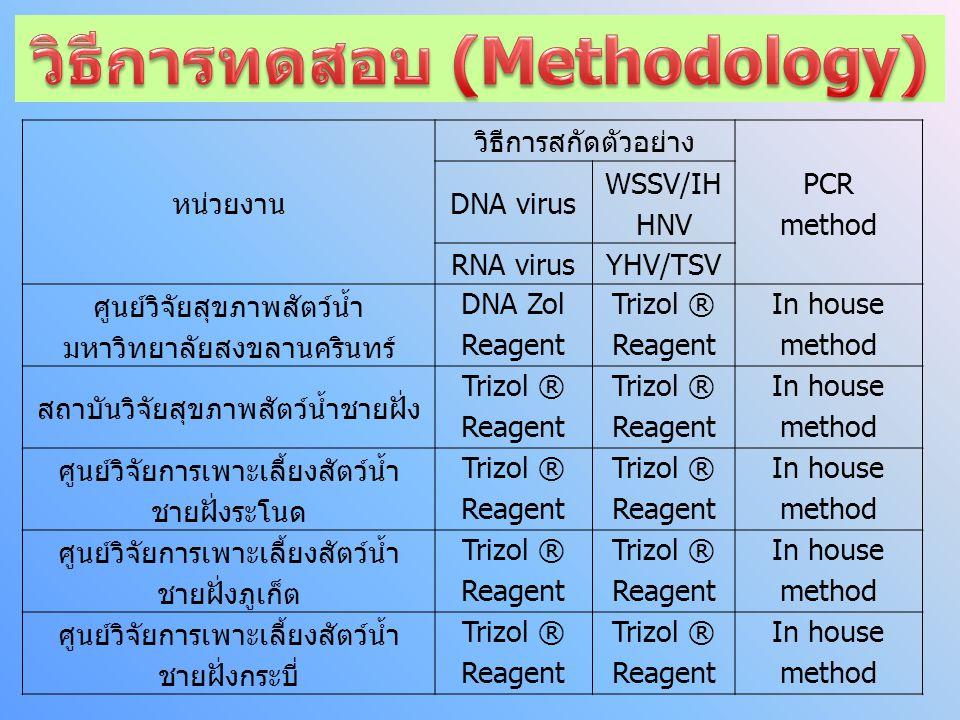 หน่วยงาน วิธีการสกัดตัวอย่าง PCR method DNA virus WSSV/IH HNV RNA virusYHV/TSV ศูนย์วิจัยสุขภาพสัตว์น้ำ มหาวิทยาลัยสงขลานครินทร์ DNA Zol Reagent Trizol ® Reagent In house method สถาบันวิจัยสุขภาพสัตว์น้ำชายฝั่ง Trizol ® Reagent Trizol ® Reagent In house method ศูนย์วิจัยการเพาะเลี้ยงสัตว์น้ำ ชายฝั่งระโนด Trizol ® Reagent Trizol ® Reagent In house method ศูนย์วิจัยการเพาะเลี้ยงสัตว์น้ำ ชายฝั่งภูเก็ต Trizol ® Reagent Trizol ® Reagent In house method ศูนย์วิจัยการเพาะเลี้ยงสัตว์น้ำ ชายฝั่งกระบี่ Trizol ® Reagent Trizol ® Reagent In house method