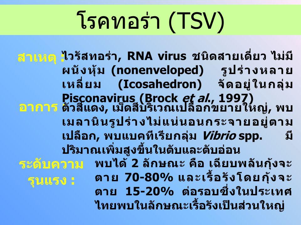 ไวรัสทอร่า, RNA virus ชนิดสายเดี่ยว ไม่มี ผนังหุ้ม (nonenveloped) รูปร่างหลาย เหลี่ยม (Icosahedron) จัดอยู่ในกลุ่ม Pisconavirus (Brock et al., 1997) สาเหตุ : อาการ : ตัวสีแดง, เม็ดสีบริเวณเปลือกขยายใหญ่, พบ เมลานินรูปร่างไม่แน่นอนกระจายอยู่ตาม เปลือก, พบแบคทีเรียกลุ่ม Vibrio spp.