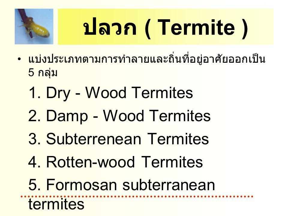 ปลวก ( Termite ) แบ่งประเภทตามการทำลายและถิ่นที่อยู่อาศัยออกเป็น 5 กลุ่ม 1. Dry - Wood Termites 2. Damp - Wood Termites 3. Subterrenean Termites 4. Ro