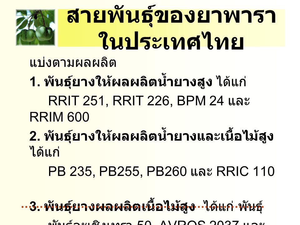 สายพันธุ์ของยาพารา ในประเทศไทย แบ่งตามผลผลิต 1. พันธุ์ยางให้ผลผลิตน้ำยางสูง ได้แก่ RRIT 251, RRIT 226, BPM 24 และ RRIM 600 2. พันธุ์ยางให้ผลผลิตน้ำยาง