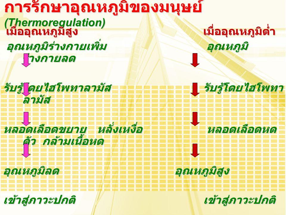 เมื่ออุณหภูมิสูงเมื่ออุณหภูมิต่ำ เมื่ออุณหภูมิสูงเมื่ออุณหภูมิต่ำ อุณหภูมิร่างกายเพิ่ม อุณหภูมิ ร่างกายลด อุณหภูมิร่างกายเพิ่ม อุณหภูมิ ร่างกายลด รับร