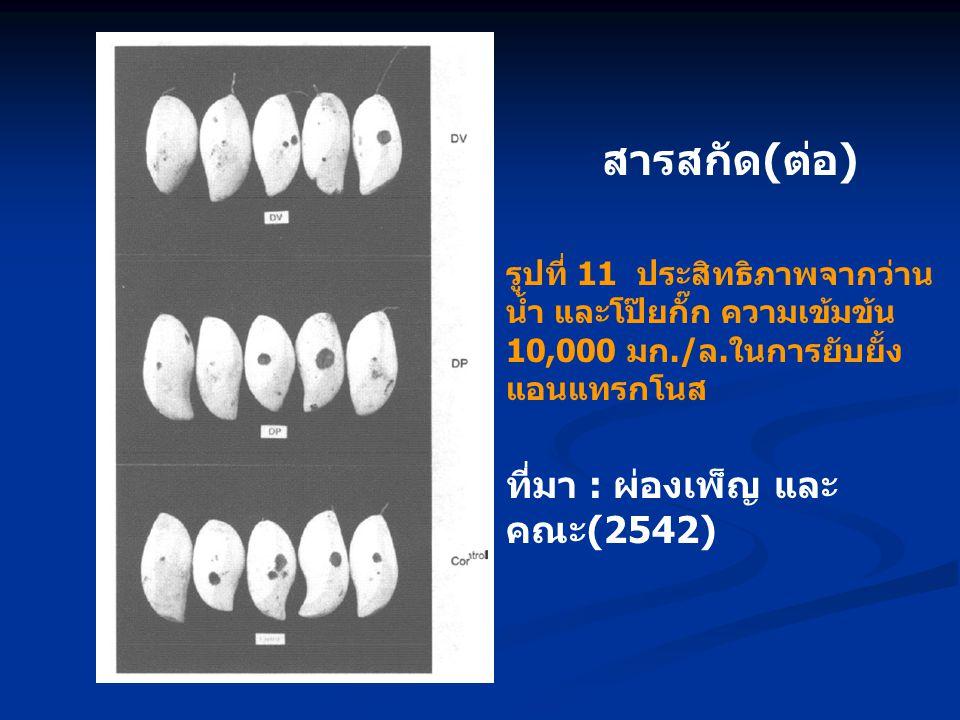 สารสกัด ( ต่อ ) รูปที่ 11 ประสิทธิภาพจากว่าน น้ำ และโป๊ยกั๊ก ความเข้มข้น 10,000 มก./ล.ในการยับยั้ง แอนแทรกโนส ที่มา : ผ่องเพ็ญ และ คณะ (2542)