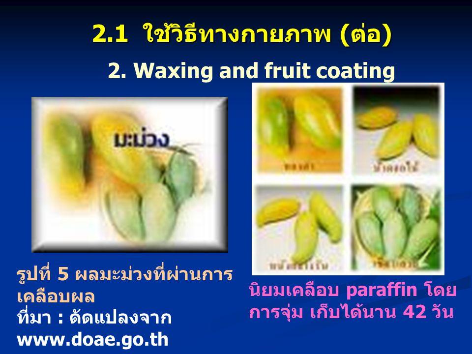 นิยมเคลือบ paraffin โดย การจุ่ม เก็บได้นาน 42 วัน 2. Waxing and fruit coating 2.1 ใช้วิธีทางกายภาพ (ต่อ) รูปที่ 5 ผลมะม่วงที่ผ่านการ เคลือบผล ที่มา :