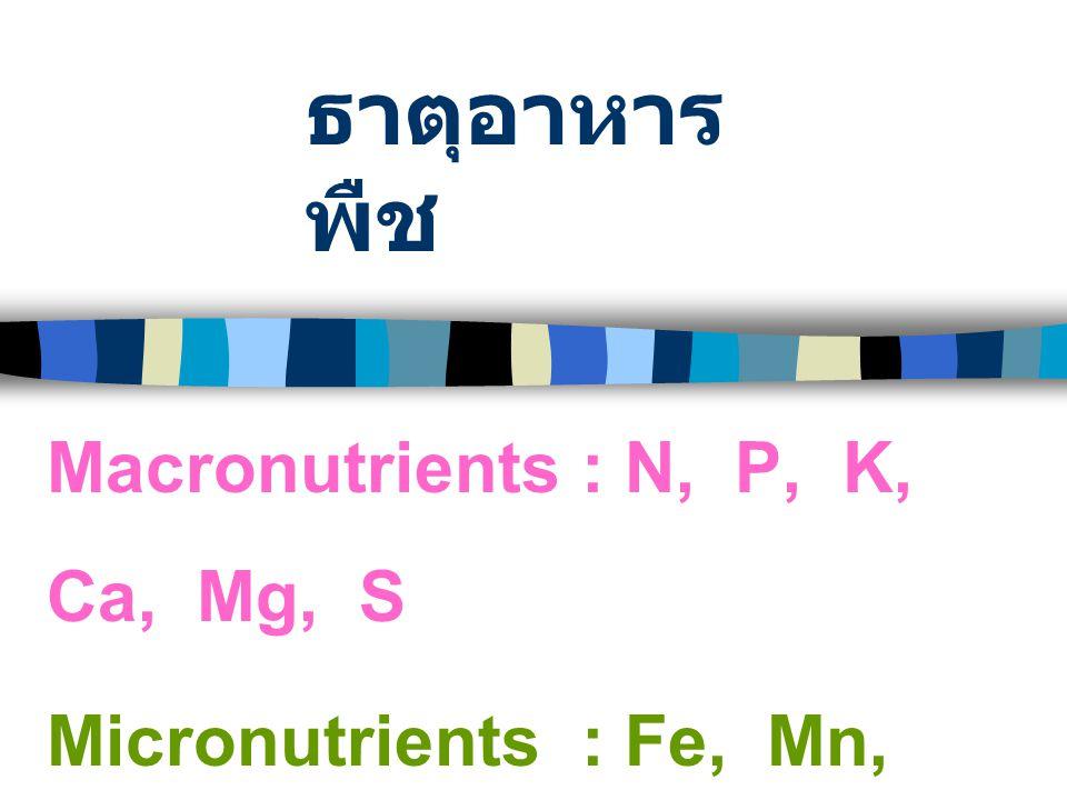 CornPeanuts Iron Deficiency Symptoms :