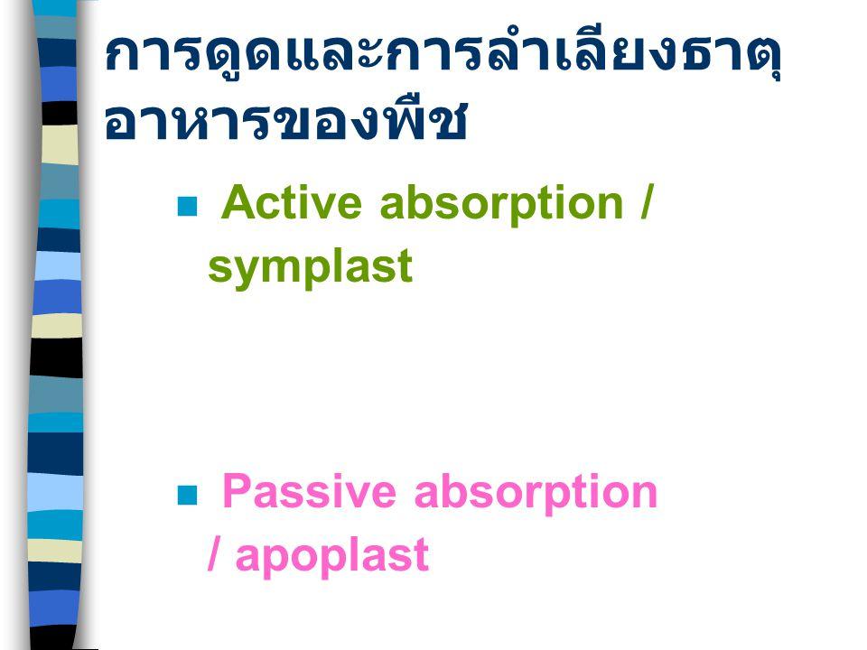 การดูดและการลำเลียงธาตุ อาหารของพืช Active absorption / symplast Passive absorption / apoplast