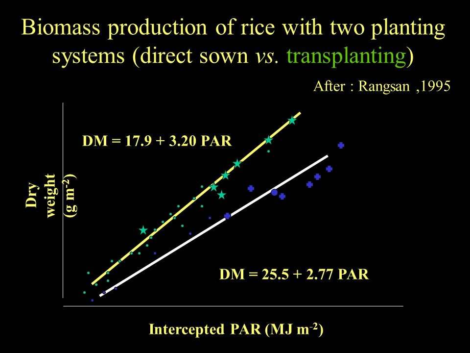 Biomass production of rice with two planting systems (direct sown vs.
