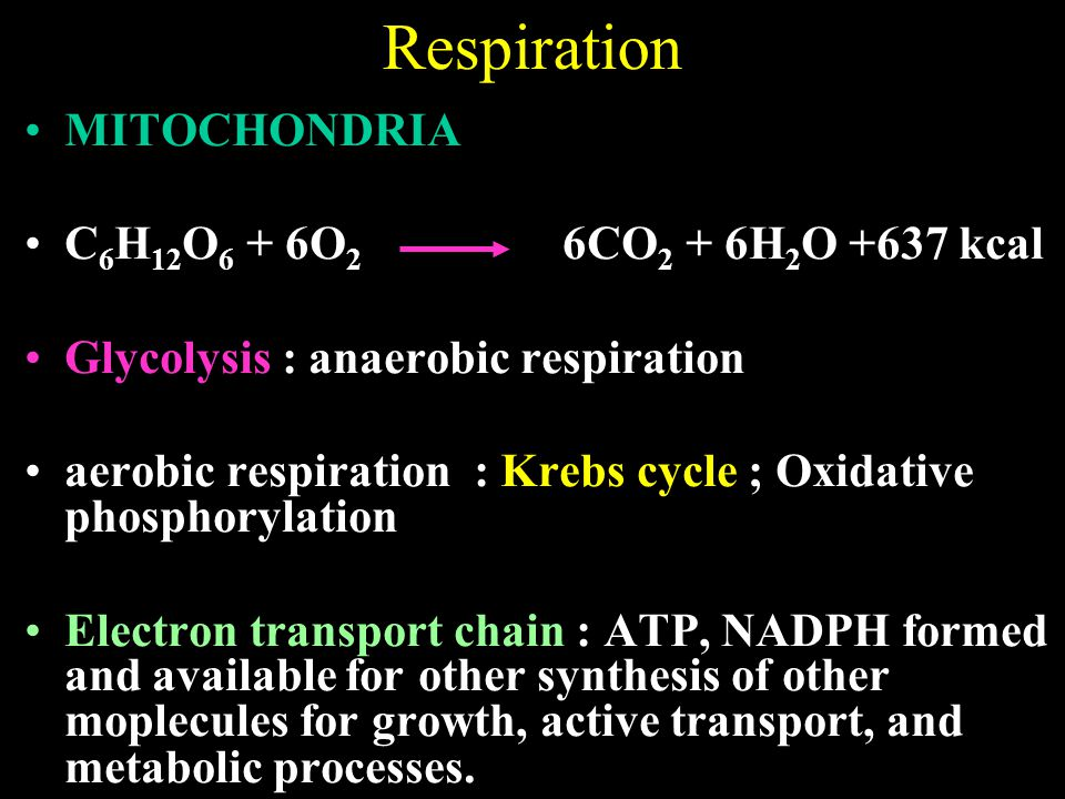 MITOCHONDRIA C 6 H 12 O 6 + 6O 2 6CO 2 + 6H 2 O +637 kcal Glycolysis : anaerobic respiration aerobic respiration : Krebs cycle ; Oxidative phosphorylation Electron transport chain : ATP, NADPH formed and available for other synthesis of other moplecules for growth, active transport, and metabolic processes.