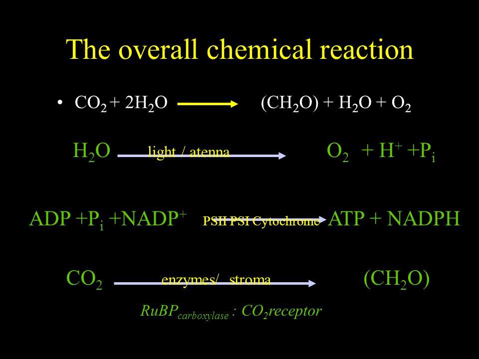 CHLOROPLAST 1- 10  m Lamellae (membranes) : light reaction –stroma lamella (double lamella) –grana lamella (stacked lamella) Stroma : dark reaction