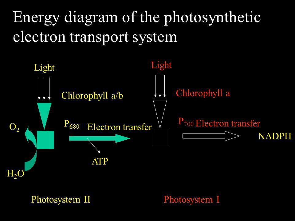 Aerobic respiration has 3 stages : C 6 H 12 O 6 + 6O 2 6CO 2 + 6H 2 O + energy Sucrose O2O2 H2OH2O NADH+, ADP NADH, ATP Glycolysis Pyruvic acid TCA Krebs' cycle e transport chain Oxidative phosphorylation NAD + NADH