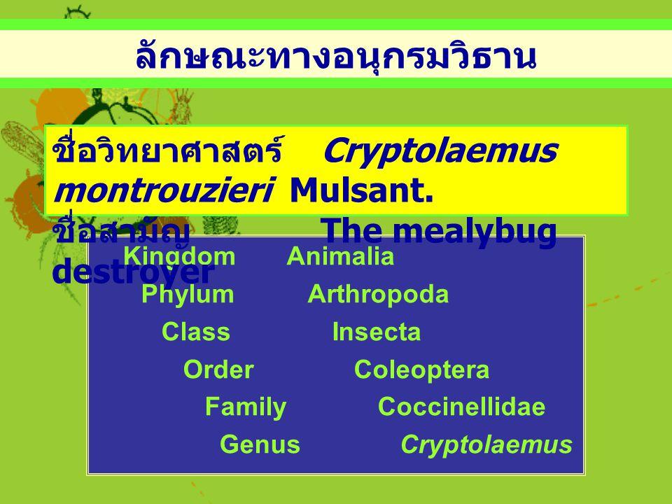 ลักษณะทางอนุกรมวิธาน Kingdom Animalia Phylum Arthropoda Class Insecta Order Coleoptera Family Coccinellidae Genus Cryptolaemus ชื่อวิทยาศาสตร์ Cryptol