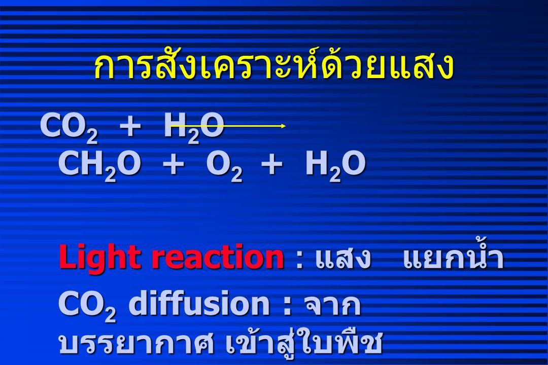 การเจริญเติบโตของพืช DW = Pn - Res - Loss - Translocation = Photosynthesis - Respiration = Photosynthesis - Respiration