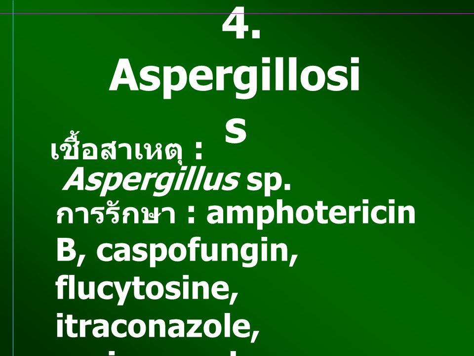 4. Aspergillosi s เชื้อสาเหตุ : Aspergillus sp. การรักษา : amphotericin B, caspofungin, flucytosine, itraconazole, voriconazole