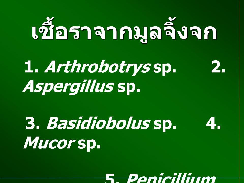 เชื้อราจากมูลจิ้งจก 1. Arthrobotrys sp. 2. Aspergillus sp. 3. Basidiobolus sp. 4. Mucor sp. 5. Penicillium spp.