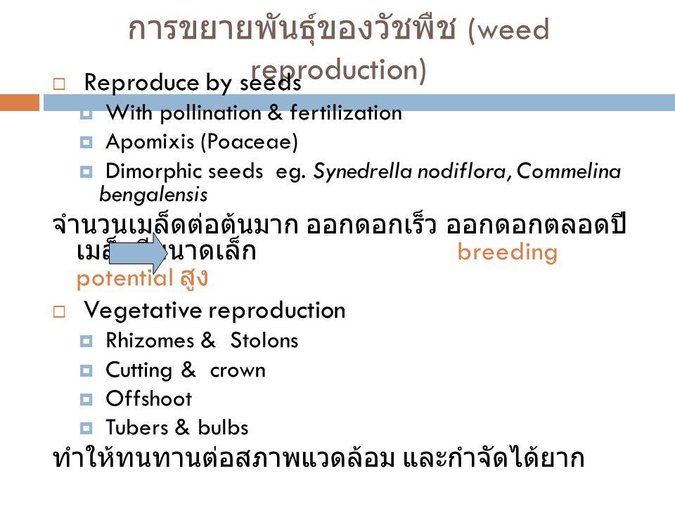 การงอกของเมล็ด วัชพืช  longivity ของเมล็ดขึ้นอยู่กันพันธุกรรม และ สิ่งแวดล้อม บางครั้งทำให้เมล็ดเกิด secondary dormancy อาจนาน 2-4 ปี  การงอกของเมล็ดขึ้นอยู่กับน้ำ และอากาศที่ เมล็ดได้รับ และขึ้นอยู่กับ ความลึก การ จัดการน้ำ ( ในนาข้าว ) การไถพรวน ร่มเงา และการเผาแปลง