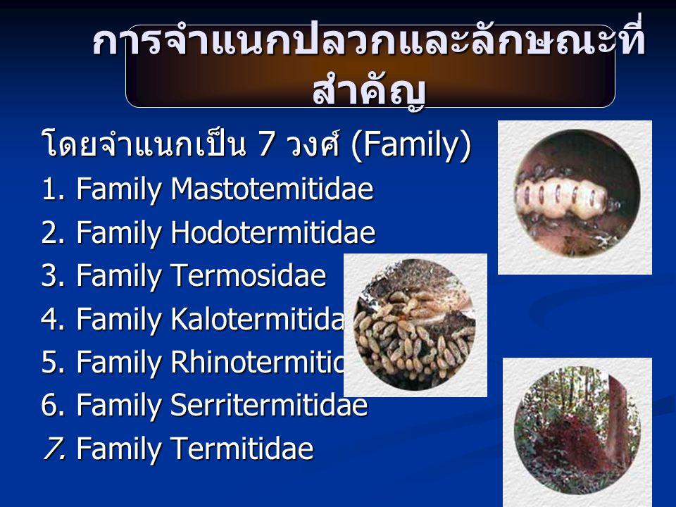 การจำแนกปลวกและลักษณะที่ สำคัญ โดยจำแนกเป็น 7 วงศ์ (Family) 1. Family Mastotemitidae 2. Family Hodotermitidae 3. Family Termosidae 4. Family Kalotermi