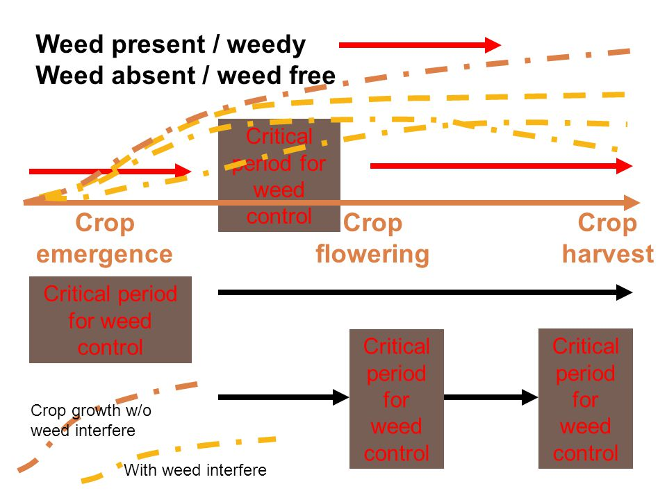 Crop emergence Weed present / weedy Weed absent / weed free Crop harvest Critical period for weed control Crop flowering Crop growth w/o weed interfer