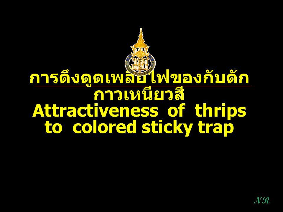 การดึงดูดเพลี้ยไฟของกับดัก กาวเหนียวสี Attractiveness of thrips to colored sticky trap NR