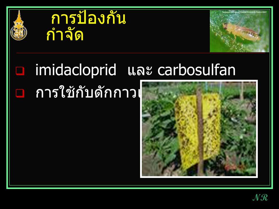 การป้องกัน กำจัด  imidacloprid และ carbosulfan  การใช้กับดักกาวเหนียว NR