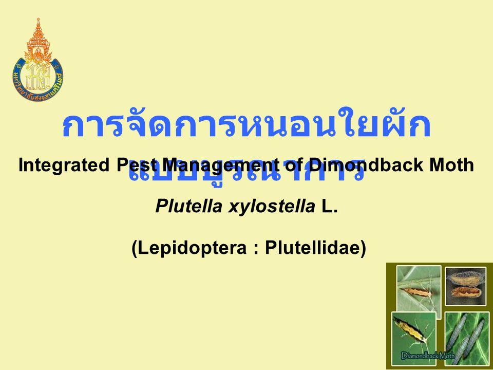 Integrated Pest Management of Dimondback Moth ระยะปลูก ควบคุมโดยใช้ชีววิธี การใช้วิธีกล การใช้สารกำจัดศัตรูพืชจาก ธรรมชาติ การใช้สารเคมี การจัดการน้ำ