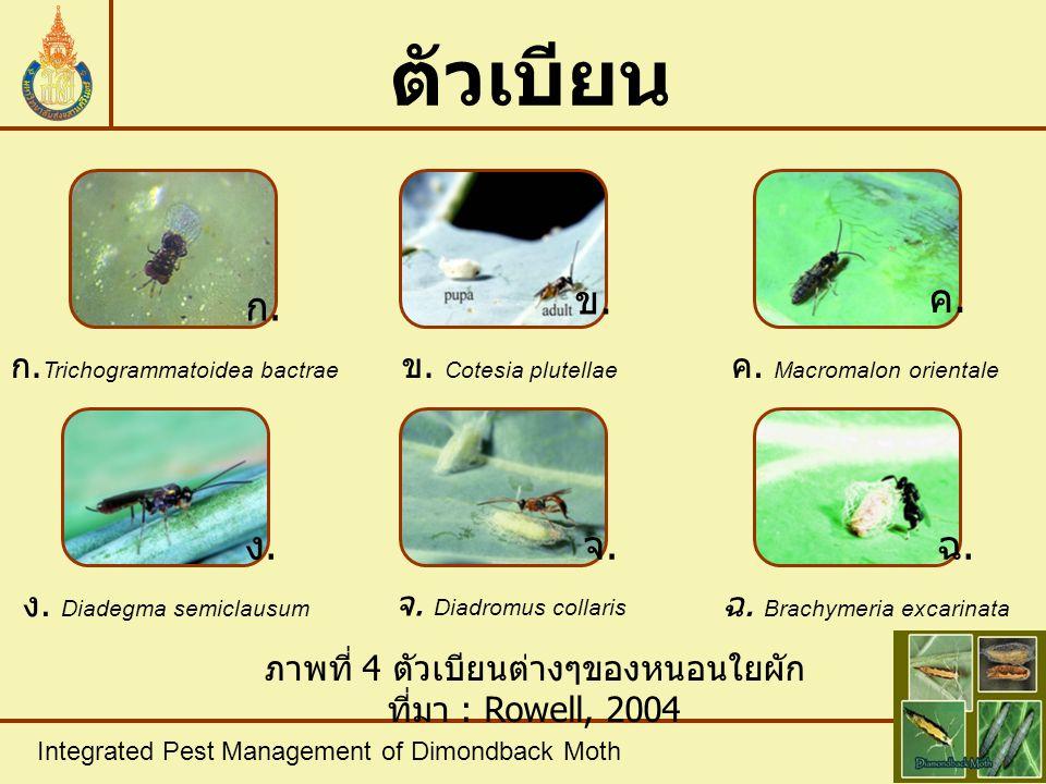 Integrated Pest Management of Dimondback Moth ตัวเบียน ภาพที่ 4 ตัวเบียนต่างๆของหนอนใยผัก ที่มา : Rowell, 2004 ก. Trichogrammatoidea bactrae ข. Cotesi