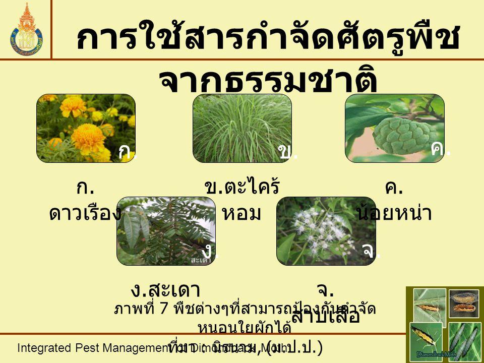 Integrated Pest Management of Dimondback Moth การใช้สารกำจัดศัตรูพืช จากธรรมชาติ ก. ดาวเรือง ข. ตะไคร้ หอม ค. น้อยหน่า ง. สะเดา จ. สาบเสือ ภาพที่ 7 พื