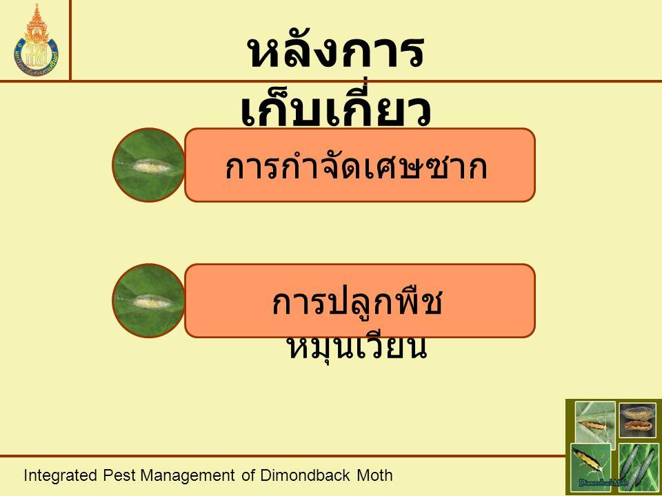 Integrated Pest Management of Dimondback Moth หลังการ เก็บเกี่ยว การกำจัดเศษซาก การปลูกพืช หมุนเวียน