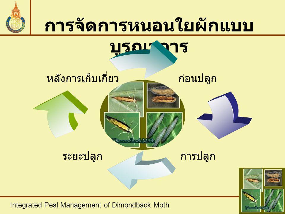 Integrated Pest Management of Dimondback Moth สรุป - วิธีการป้องกันกำจัดหนอนใยผัก ที่ดีที่สุดควรใช้วิธีการจัดการแบบ บูรณาการ - ช่วยสนับสนุนให้เกิดการควบคุม ตามธรรมชาติ