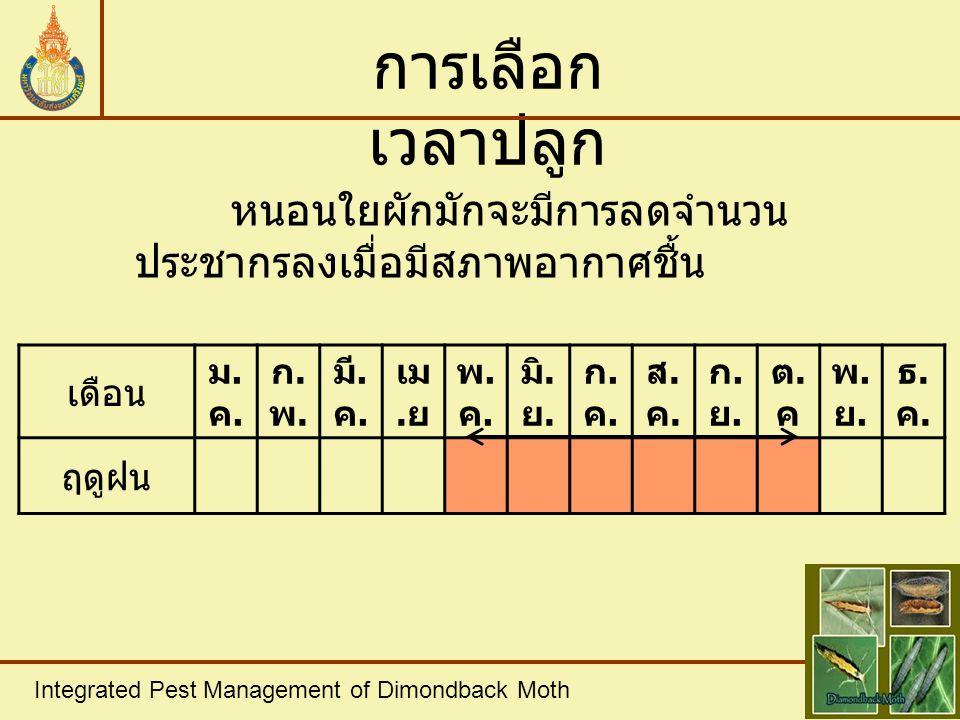 Integrated Pest Management of Dimondback Moth การเลือก เวลาปลูก หนอนใยผักมักจะมีการลดจำนวน ประชากรลงเมื่อมีสภาพอากาศชื้น เดือน ม.ค.ม.ค. ก.พ.ก.พ. มี. ค