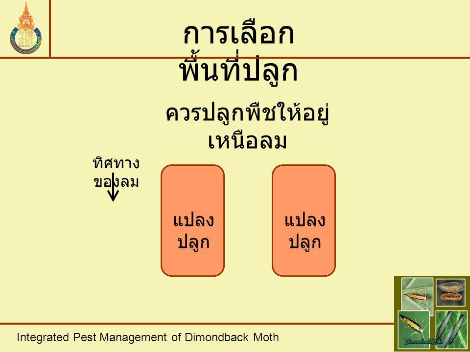 Integrated Pest Management of Dimondback Moth การใช้ สารเคมี ตารางที่ 1 แสดงค่า Economic thresold level ของหนอนใยผัก ในช่วงอายุต่างๆของพืชและการจัดการ ช่วงอายุ ของพืช Economic threshold level การจัดการ 1 - 4 สัปดาห์ หนอนใยผัก < 2 ตัว / ต้น - หนอนใยผัก >2 40% - หนอนใยผัก >2<4 ตัว / ต้น และมีอัตรา การเบียน < 40% ใช้สารป้องกัน กำจัดศัตรูพืชจาก ธรรมชาติหรือเชื้อ โรค หนอนใยผัก > 4 ตัว / ต้น ใช้สารเคมีกำจัด ศัตรูพืช