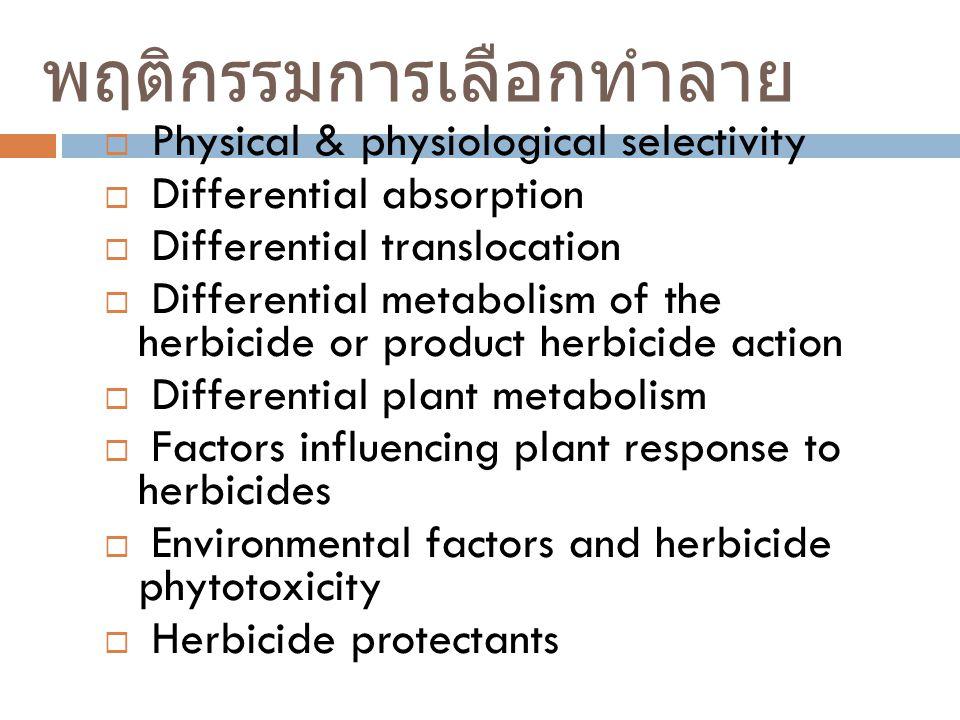 พฤติกรรมการเลือกทำลาย  Physical & physiological selectivity  Differential absorption  Differential translocation  Differential metabolism of the h