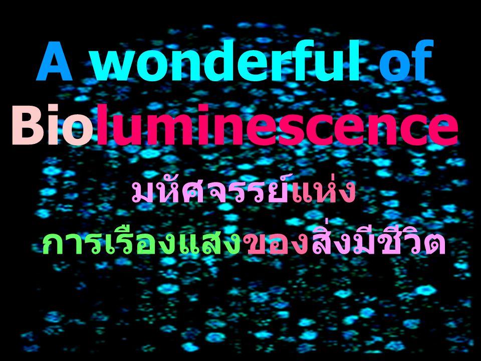 A wonderful of Bioluminescence มหัศจรรย์แห่ง การเรืองแสงของสิ่งมีชีวิต