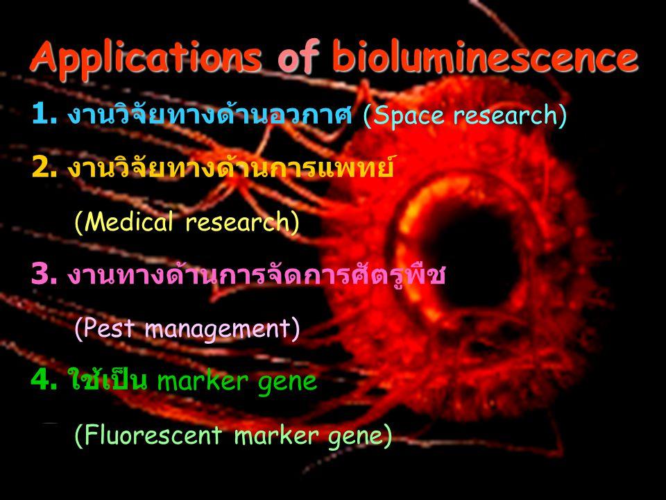 Applications of bioluminescence 1. งานวิจัยทางด้านอวกาศ (Space research) 2. งานวิจัยทางด้านการแพทย์ (Medical research) 3. งานทางด้านการจัดการศัตรูพืช