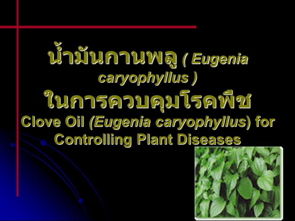 น้ำมันกานพลู ( Eugenia caryophyllus ) ในการควบคุมโรคพืช Clove Oil (Eugenia caryophyllus) for Controlling Plant Diseases