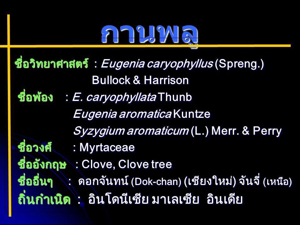 กานพลู ชื่อวิทยาศาสตร์ : Eugenia caryophyllus (Spreng.) ชื่อวิทยาศาสตร์ : Eugenia caryophyllus (Spreng.) Bullock & Harrison Bullock & Harrison ชื่อพ้อง : E.