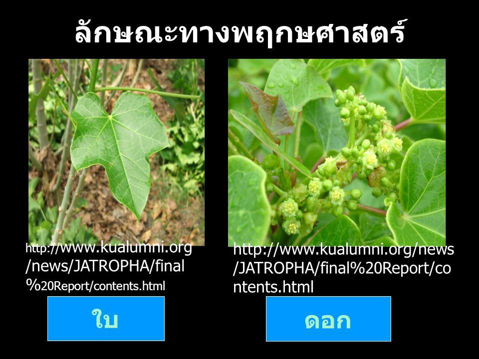 ลักษณะทางพฤกษศาสตร์ ( ต่อ ) ผล เมล็ด http://www.kualumni.org/news/JAT ROPHA/final%20Report/contents.ht ml