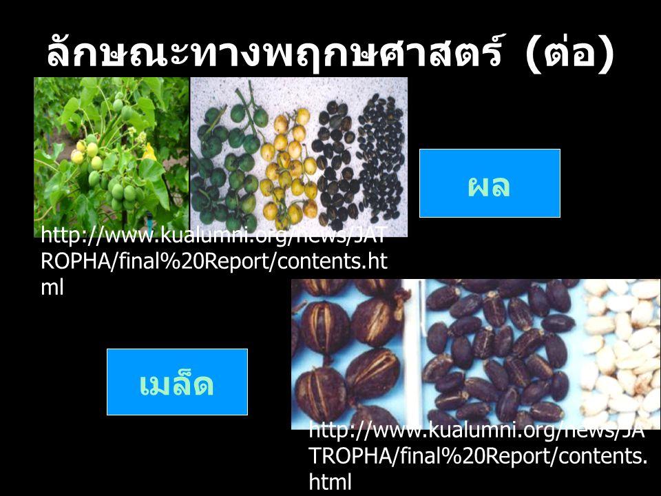 การเข้าทำลายของแมลงศัตรูสบู่ แมลงที่เข้าทำลายในประเทศไทย เพลี้ยไฟเพลี้ยหอย เพลี้ยไฟ เพลี้ยหอย http://seedcenter15.doae.go.t h/Library/Pict/Insect/InsectRi ce_23.jpg http://www.inra.fr/internet/P roduits/HYPPZ/DESSINS/803 2054.gif