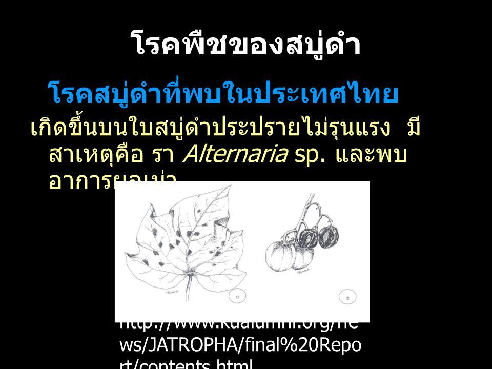โรคพืชของสบู่ดำ โรคสบู่ดำที่พบในประเทศไทย เกิดขึ้นบนใบสบู่ดำประปรายไม่รุนแรง มี สาเหตุคือ รา Alternaria sp. และพบ อาการผลเน่า http://www.kualumni.org/