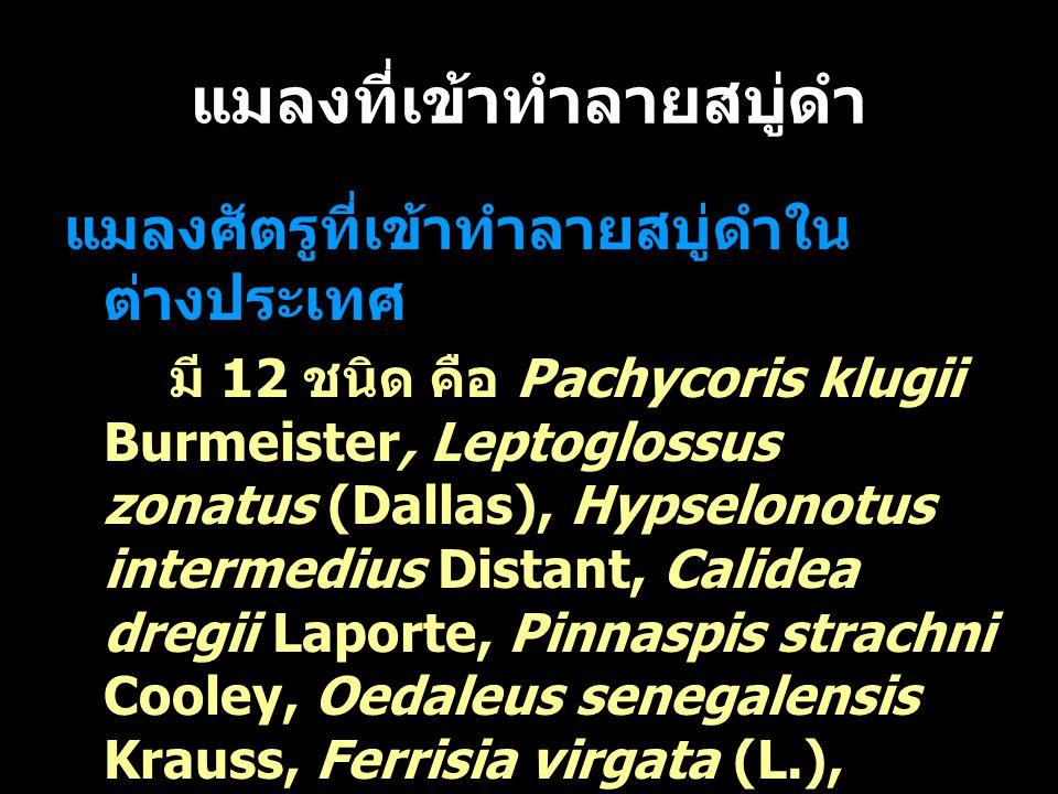 แมลงที่เข้าทำลายสบู่ดำ แมลงศัตรูที่เข้าทำลายสบู่ดำใน ต่างประเทศ มี 12 ชนิด คือ Pachycoris klugii Burmeister, Leptoglossus zonatus (Dallas), Hypselonot