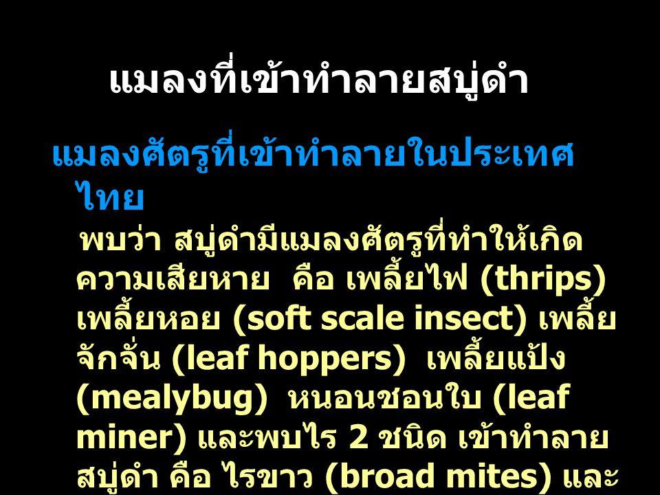 แมลงที่เข้าทำลายสบู่ดำ แมลงศัตรูที่เข้าทำลายในประเทศ ไทย พบว่า สบู่ดำมีแมลงศัตรูที่ทำให้เกิด ความเสียหาย คือ เพลี้ยไฟ (thrips) เพลี้ยหอย (soft scale i