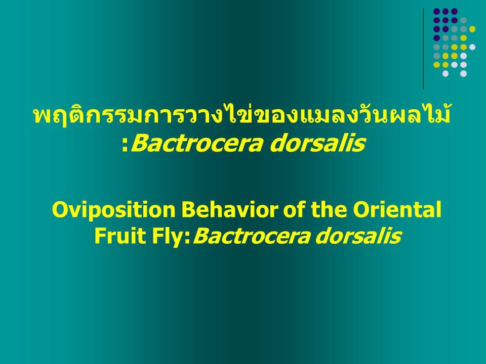 พบมาก และสามารถเข้าทำลายพืชได้หลายชนิด  มีความสำคัญทางเศรษฐกิจ  ความเสียหายโดยตรงเกิดจากแมลงเพศเมีย  การควบคุมให้ได้ผลต้องใช้วิธีการแบบบูรณาการ แมลงวันผลไม้ : Bactrocera dorsalis บทนำ