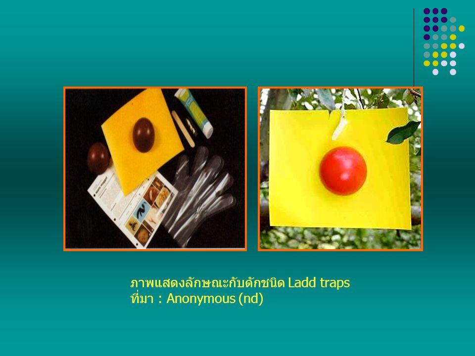ภาพแสดงลักษณะกับดักชนิด Ladd traps ที่มา : Anonymous (nd)