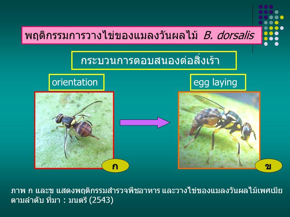 สรุป ความรู้จากการศึกษาเกี่ยวกับพฤติกรรมการ วางไข่ของแมลงวันผลไม้ ตั้งแต่กระบวนการค้นหา การตรวจสอบ การยอมรับพืชอาหาร จนกระทั่ง แมลงวันผลไม้สามารถวางไข่บนพืชอาหารที่ เหมาะสมได้เป็นผลสำเร็จ สามารถนำไปประยุกต์ใน การประดิษฐ์หรือปรับปรุงการสำรวจ และการกำจัด แมลงชนิดนี้ได้