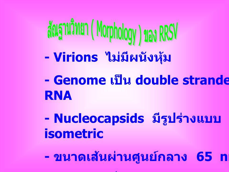 - Virions ไม่มีผนังหุ้ม - Genome เป็น double stranded RNA - Nucleocapsids มีรูปร่างแบบ isometric - ขนาดเส้นผ่านศูนย์กลาง 65 nm - เห็นเป็นเหลี่ยม capsomere เห็นไม่ชัด